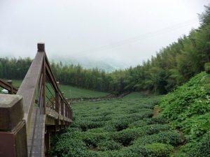 Tea stairs