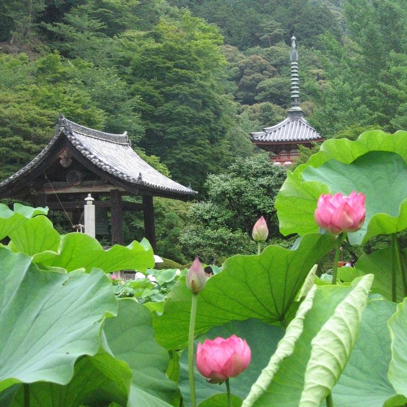 Uji, Japan Lotus Temple