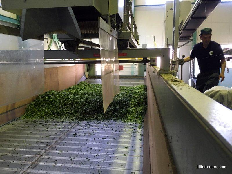 processing fresh tea