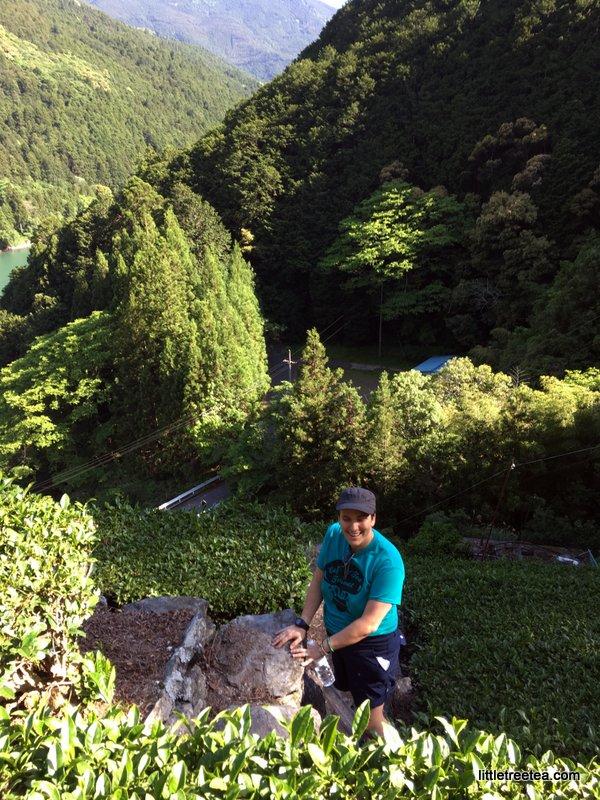 climbing up into the mountain tea gardens