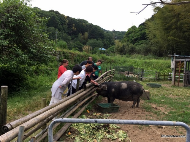 Pet pig at Rakan